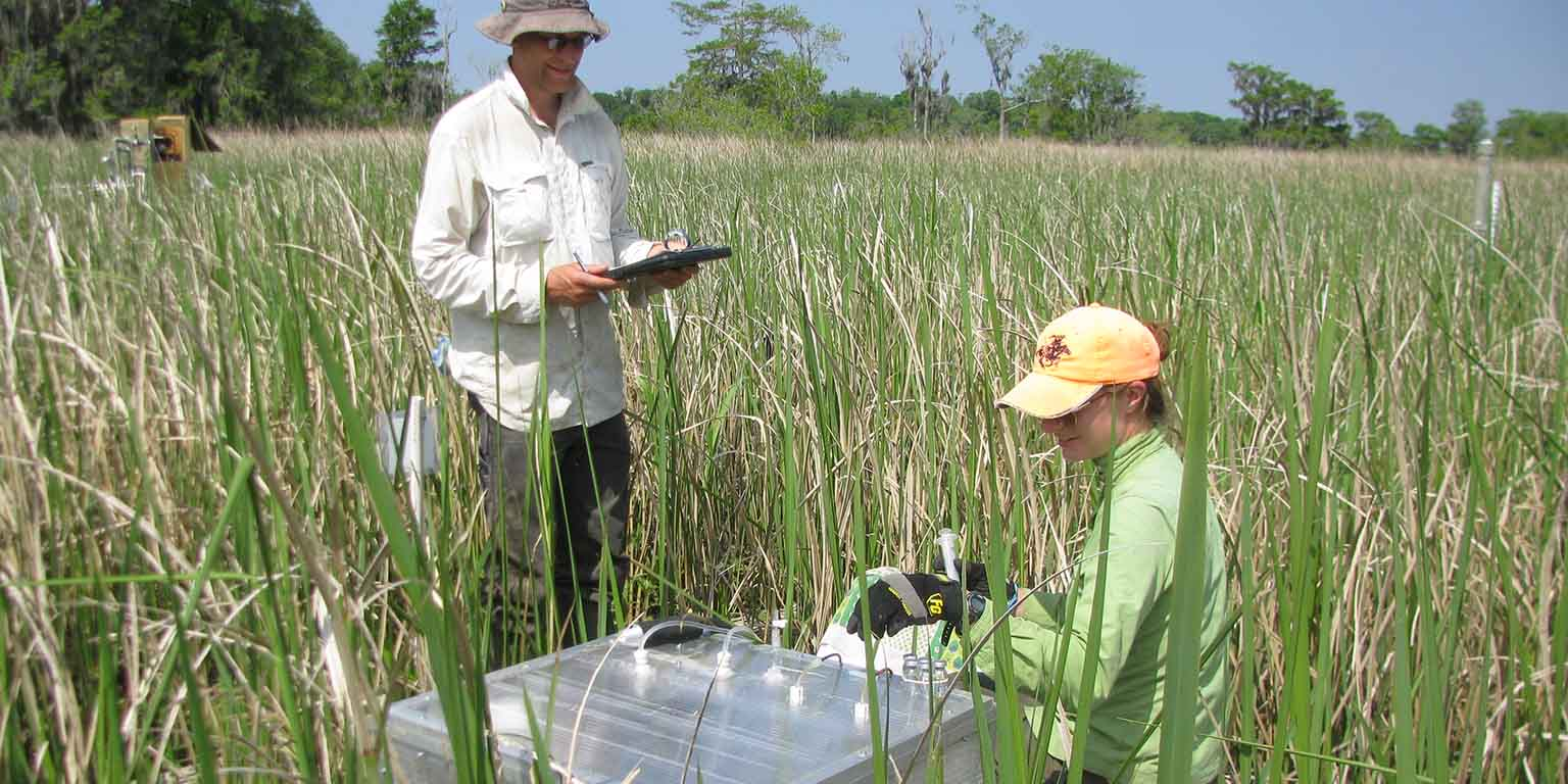 Researchers in a marsh